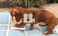 ปฏิกิริยาเมื่อน้องหมาเจอบางอย่างใน iPad !!