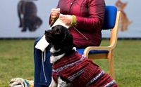 เปลี่ยนหมาดำให้น่ารัก! สก็อตแลนด์ถักเสื้อให้ตูบ หวังให้เห็นความน่ารักและรับเลี้ยง