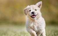 5 สิ่ง ถ้าไม่รักหมาจริงไม่มีทางทำให้แน่นอน !!