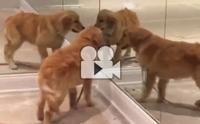 ทำไมอยู่ ๆ ตูบเจอแฝด 4 เลยละเนี่ย !!