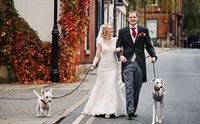 จากสุนัขผอมหนังติดกระดูกกับวันนี้ที่เดินเคียงข้างหญิงสาวในวันแต่งงาน !