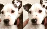 เหมือนเป๊ะ! Lucy น้องหมาที่เกิดมามีลายที่ใบหูเหมือนหน้าตัวเอง