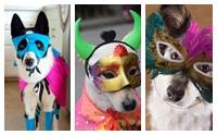 ภาพน่ารักๆ เมื่อน้องหมาขอเกาะกระแส The Mask Singer