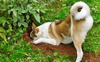 4 พฤติกรรมน้องหมาพาเพลีย ที่เจ้าของต้องเจอในหน้าร้อนนี้!