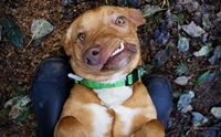 จากสุนัขหน้าบิดเบี้ยวที่เกือบถูกการุณยฆาต กับวันนี้ที่ได้มีชีวิตใหม่ !!