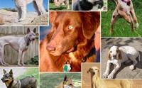 20 สายพันธุ์น้องหมาหายากของโลก!!!