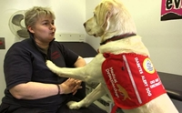 สุนัขดมกลิ่นน้ำตาลในเลือด ช่วยชีวิตเจ้าของป่วยเบาหวาน 3,500 ครั้ง
