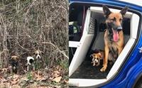 ฮีโร! สุนัขตำรวจช่วยชีวิต 3 ลูกหมาถูกทิ้งในพงหญ้า คอยดูแลเป็นอย่างดี