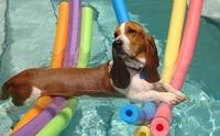5 กิจกรรมง่าย ๆ ทำร่วมกับน้องหมาในหน้าร้อน
