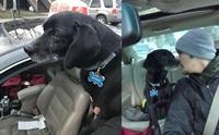 ทิ้งไม่ลง! หนุ่มใจดียอมไปส่งพิซซ่าช้าเพราะหยุดรถช่วยสุนัขหลงทาง