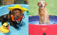 ดับร้อน! รวมภาพน่ารักๆ เมื่อน้องหมาชวนแช่น้ำ