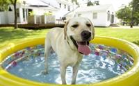 วิธีคลายร้อนแบบหมา ๆ ที่ผู้เลี้ยงคิดว่าเป็นปัญหาพฤติกรรม