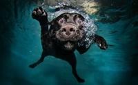 จัดอันดับ หมาบ้าน้ำ เห็นน้ำเป็นไม่ได้ต้องแช่!! (ไม่เรียงลำดับนะ)