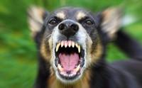 ไขข้อข้องใจ โรคพิษสุนัขบ้า เป็นได้เฉพาะหน้าร้อนจริงหรือ?