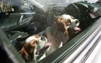 จัดอันดับ อันตรายที่เสี่ยงเกิดกับหมาในหน้าร้อน (ไม่เรียงลำดับนะ)
