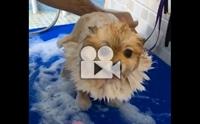 อยู่นิ่งแบบนี้ หนูชอบอาบน้ำมากเลยใช่มั้ยลูก?