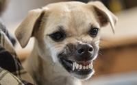 เมื่อหมาหวงชามอาหารจนกัดเจ้าของ ... ปัญหาอยู่ที่