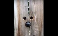 หญิงเจาะประตูรั้วให้ตูบของเพื่อนบ้าน หลังชอบกระโดดแอบมองหมาสาวในบ้าน (มีคลิป)