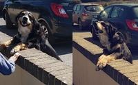 สุนัขตัวนี้ชอบมายืนหน้าโรงเรียนเพื่อรอให้เด็ก ๆ กอดและลูบหัว !
