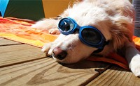 เจาะลึก!! หมาพันธุ์ต่าง ๆ ในแถบเมืองร้อนทั่วโลก