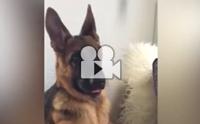 ปฏิกิริยาเมื่อน้องหมาได้ยินเสียงไม่คุ้นหู !!