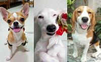 รวมภาพน้องหมา 6 สายพันธุ์ขนสั้น ที่คนไทยนิยมเลี้ยง