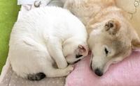 เพราะพวกเขาก็มีหัวใจ!! เรื่องราวประทับใจของน้องหมาวัย 17 ปี กับแมวพยาบาลตัวน้อย