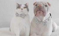 ใครว่าเราไม่ถูกกัน! มิตรภาพแสนน่ารักของน้องหมาและแมวคู่ซี้