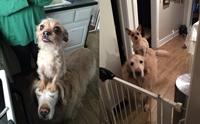คู่หูคู่ซี้! เรื่องราวน่ารัก ๆ ของน้องหมาตัวจิ๋วที่ชอบขี่หลังเพื่อนตูบตัวโต