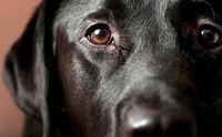 4 วิธีรับมือกับโรคลมชักในสุนัข