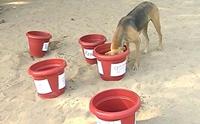 อินเดียรณรงค์ตั้งน้ำสะอาดให้สุนัขจรจัด หลังอากาศร้อนแตะ 40 องศา