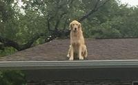 รู้จักเจ้า Huckleberry น้องหมาอินดี้ชอบขึ้นไปนั่งชมวิวชิล ๆ บนหลังคา !