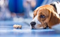 4 อาการที่บอกว่า น้องหมากำลังเครียดจากอากาศร้อน !