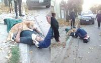 ซึ้ง! สุนัขซื่อสัตย์นอนกอดหนุ่มเจ้าของที่ได้รับบาดเจ็บไม่ยอมห่าง