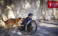 สุนัขในจีนสุดซื่อสัตย์ ช่วยเข็นรถเข็นเจ้าของโปลิโอออกไปทำงานทุกวัน !!