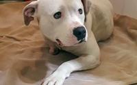 สะเทือนใจ! สุนัขกัดขาตัวเองจนขาดจากโซ่ หลังถูกล่ามทิ้งบ้านร้างนาน 5 ปี (มีคลิป)