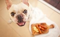 จัดอันดับ 5 เมนูต้องอาหารต้องห้าม ที่เจ้าของชอบให้หมากิน (ไม่เรียงลำดับนะ)