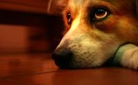 ไขเรื่องลับ ๆ ของน้องหมาที่คุณอาจไม่เคยรู้มาก่อน