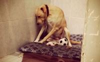 Lana สุนัขที่เศร้าที่สุดในโลกถูกนำมาคืนศูนย์พักพิงสัตว์อีกครั้ง !