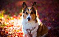 5 วิธีง่าย ๆ ป้องกันไม่ให้น้องหมาเป็น Hot Spot