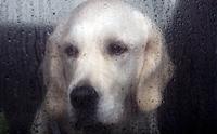 แอบดูพฤติกรรมแปลก ๆ ป่วน ๆ ของน้องหมาในหน้าฝน