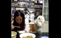 ขอตูบกินด้วยนะเจ้านาย !