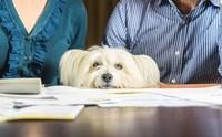 5 เรื่องน่ารู้เกี่ยวกับสมุดวัคซีนน้องหมา