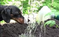 มามะเจ้านายเดี๋ยวตูบช่วยทำสวนให้สวยเลยนะโฮ่ง !