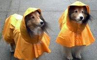 6 ทริคดี ๆ ทำให้น้องหมามีความสุขในวันฝนตก