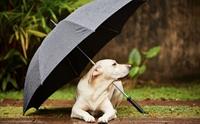 แก้ปัญหาน้องหมาไม่ยอมขับถ่ายในหน้าฝน