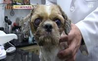 ลุ้นนาทีชีวิต ... รายการทีวียอดฮิตช่วยน้องหมาโชคร้าย หลังติดอยู่ในท่อนานนับเดือน!!