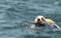 ตามติดภารกิจน้องหมาโกลเด้นว่ายน้ำเก็บขยะพิทักษ์ทะเล