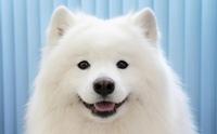 เช็กด่วน!! ความผิดปกติของฟันที่พบบ่อยในสุนัข
