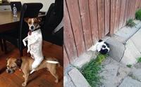 เครียดๆ ต้องดู! ภาพสุดฮาของเหล่าน้องหมาที่ใครเห็นเป็นต้องขำ